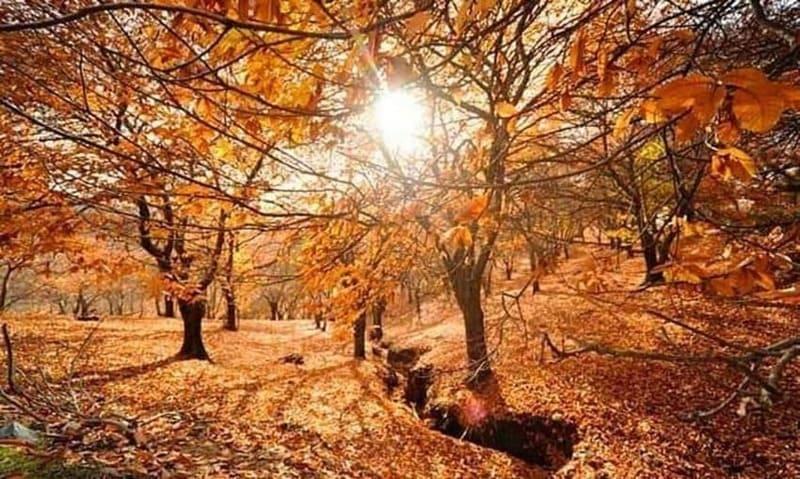 para ver y encontrar castañas, el bosque de cobre